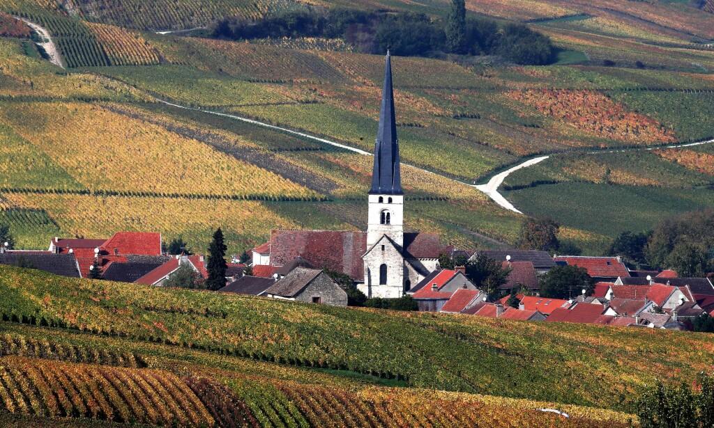 HARDT RAMMET: Franske vinprodusenter er hardt rammet av tollen USA har lagt på europeisk vin. Her er en champagne-vingård utenform Reims. Foto: Francois Nascimbeni / AFP / NTB Scanpix