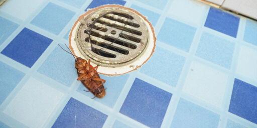 image: Insekter, kakerlakker, maur og «mulig blod» på Syden-hotellet