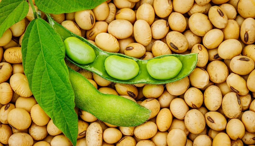 SOYABØNNER: Soyabønner inneholder cirka 40 prosent protein og er derfor spesielt bra for mennesker som ikke spiser kjøtt eller meieriprodukter. FOTO: NTB Scanpix