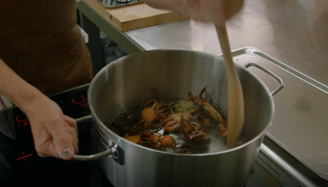 LEVENDE: Krabbene ble kastet levende i ei varm gryte, før Skjelde knuste dem med ei tresleiv. Foto: TV3