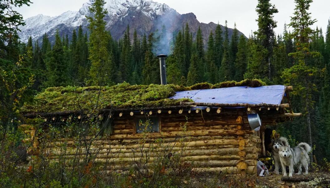 EGEN TØMMERKOIE: Tonje og Per Anders bygde sin egen tømmerhytte for å leve midt i Canadas villmark. FOTO: Tonje Blomseth