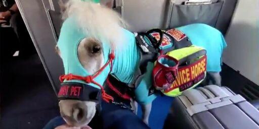 image: Tok med hest på flyet
