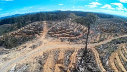 <strong>FORSVINNER:</strong> Skogen må bøte for produksjonen av palmeolje. Foto: Regnskogfondet