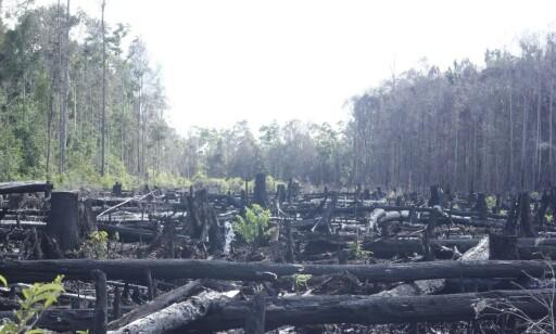 BRENT SKOG: Bildet av den nedbrente regnskogen i Indonesia er knyttet til palmeoljevirksomhet. Foto: Regnskogfondet