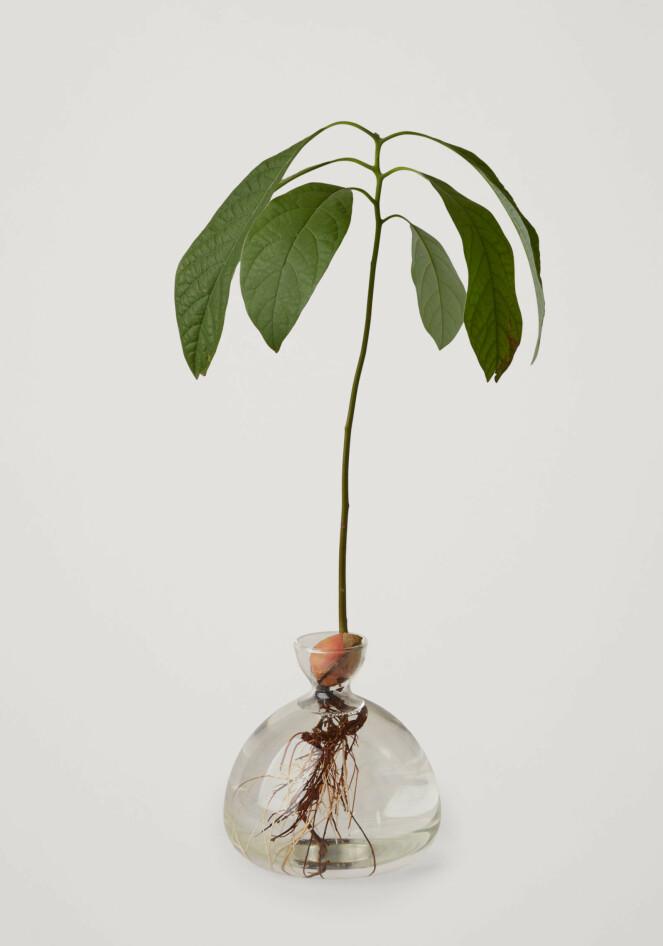 Avokado-vase fra COS, kr 390