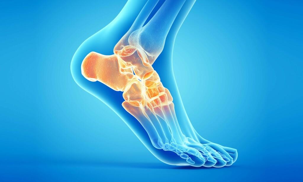 ANKELEN: Ankelen består av bein, brusk, leddbånd og sener, Illustrasjon: NTB Scanpix/Shutterstock