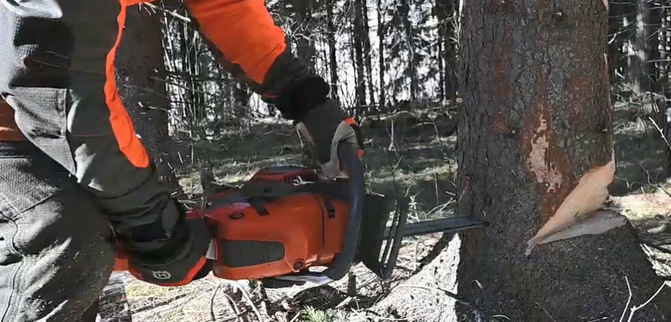 image: Slik feller du et tre
