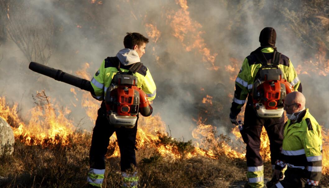 <strong>GRESSBRANN:</strong> En uvanlig mild vinter øker faren for gress- og skogbrann betraktelig. Bildet er tatt i forbindelse med en gressbrann i Tysvær i april i fjor. Foto: Tor André Johannessen / NTB scanpix