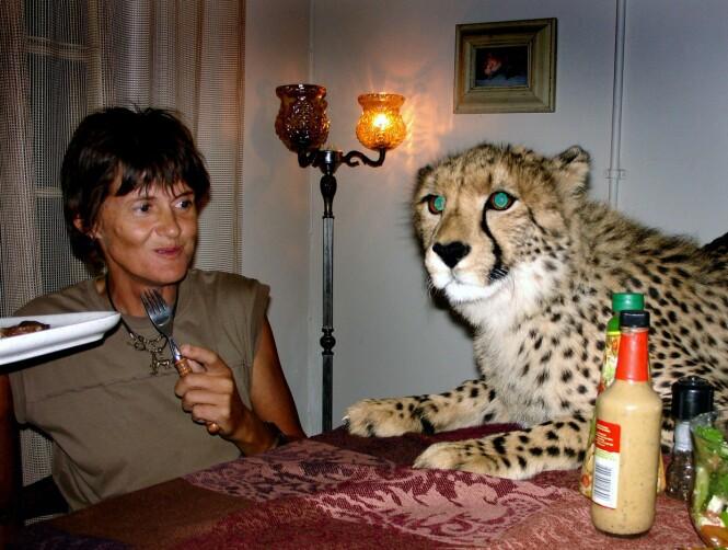 BARE SE, MEN IKKE RØRE: Riana og geparden Fiela, mens Riana spiser middag og Fiela håper på å få restene. Fiela er fire år på bildet, som er tatt i 2009. FOTO: NTB Scanpix