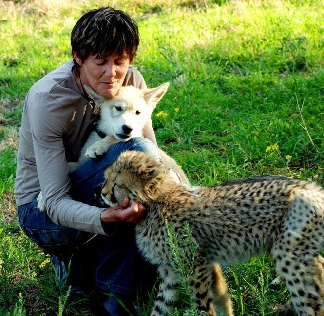 HUND OG KATT? Riana holder ulven Shakira på fanget, mens geparden Xena får seg litt kos. FOTO: NTB Scanpix