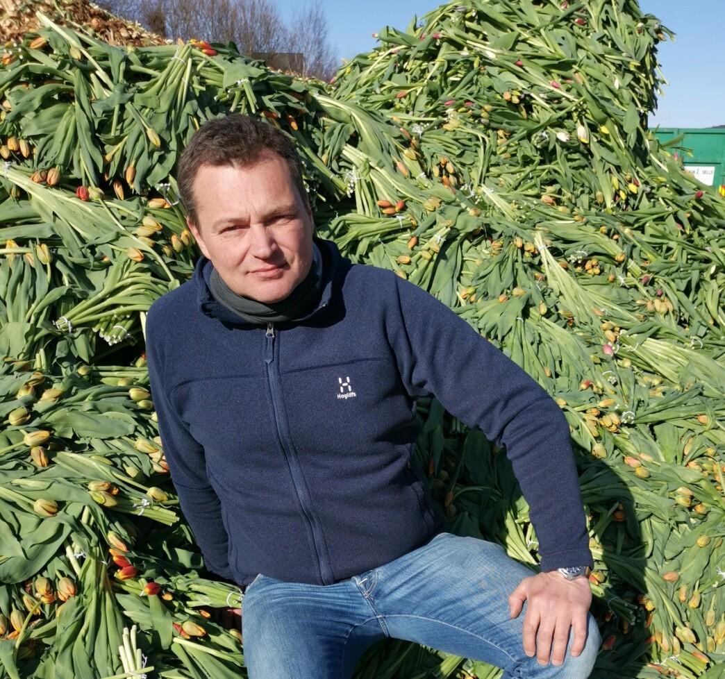 <strong>FORTVILER:</strong> Tulipanprodusentene i Norge fortviler over å måtte kaste mange hundre tusen tulipaner denne uka. Sebastian Schouten, daglig leder i gartneriet Matthe Schouten AS i Lier, er spent på hva som skjer mot påske, når de skal ut med mange millioner tulipaner - i det som normalt sett er en av de store høysesongene for tulipansalg her til lands. Salget svikter fordi folk ikke er ute og handler. Foto: Tonje Bergh