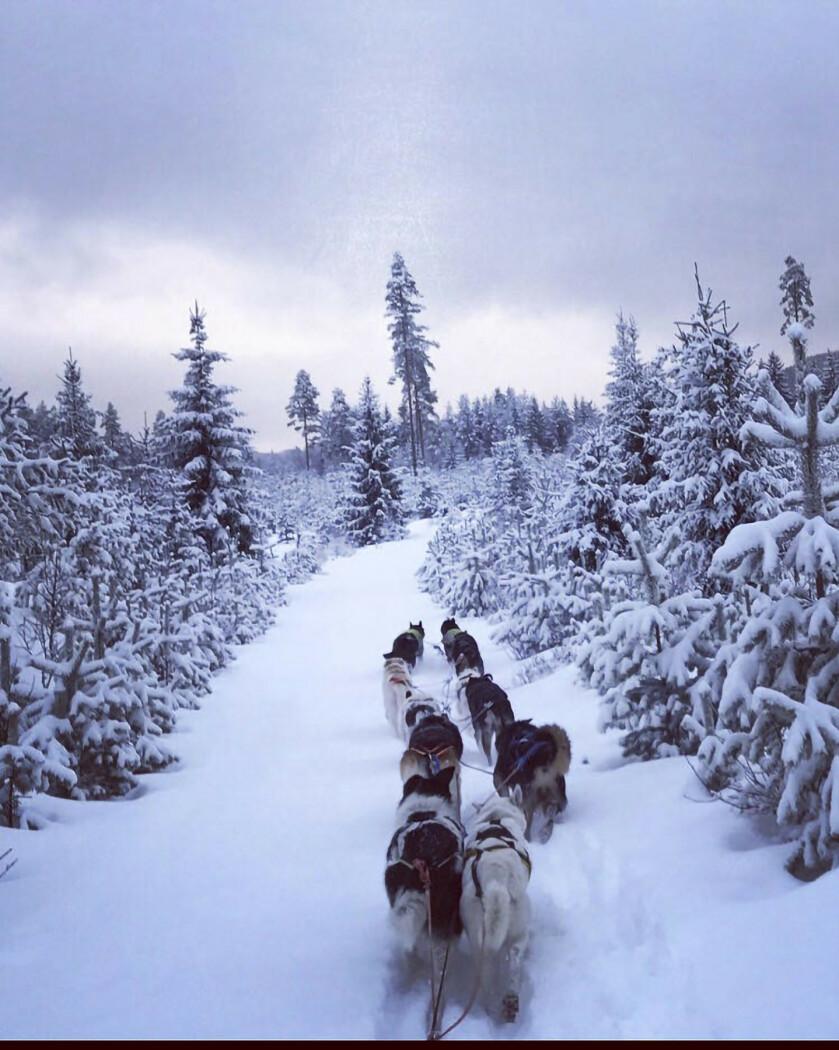 Av og til drar Eline til Finnskogen og kjører med hundeslede. FOTO: Privat