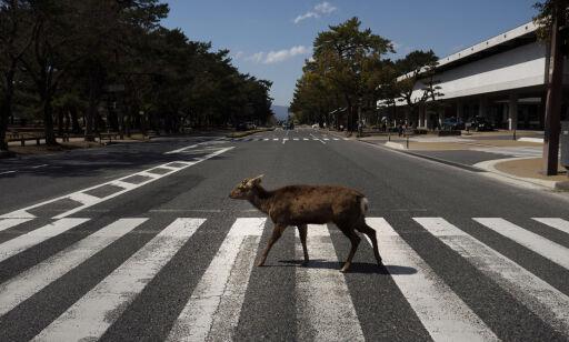 image: Dyrene tar tilbake storbyens tomme gater