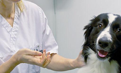 image: Hunder utsatt for to coronavirus