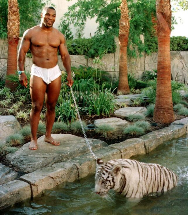 Mandatory Credit: Photo by Markson Sparks/REX (261215t) MIKE TYSON PLAYING WITH PET TIGER MIKE TYSON PLAYING WITH PET TIGER, LOS ANGELES, AMERICA  - 1996