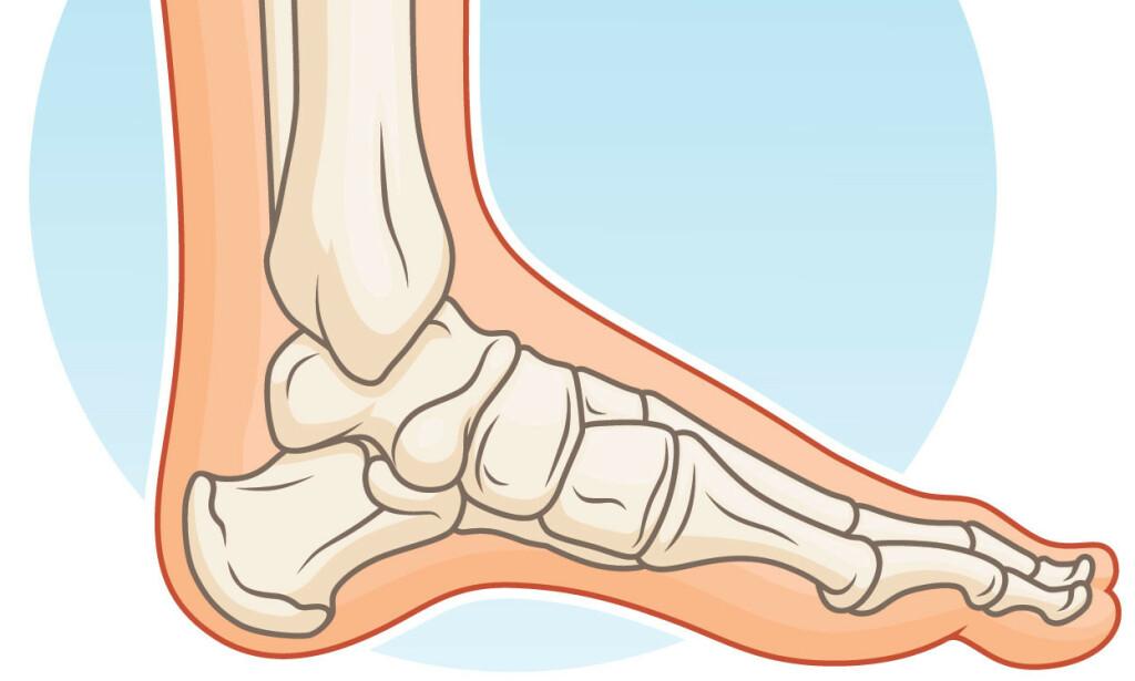 FOTENS ANATOMI: Foten består av en rekke knokler, sener, muskler, brusk, leddbånd, blodkar og nerver som gjør at du kan utføre komplekse bevegelser i disse leddene. Foto: NTB SCanpix.