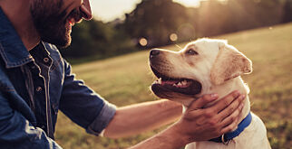 image: Forbyr spising av katt og hund