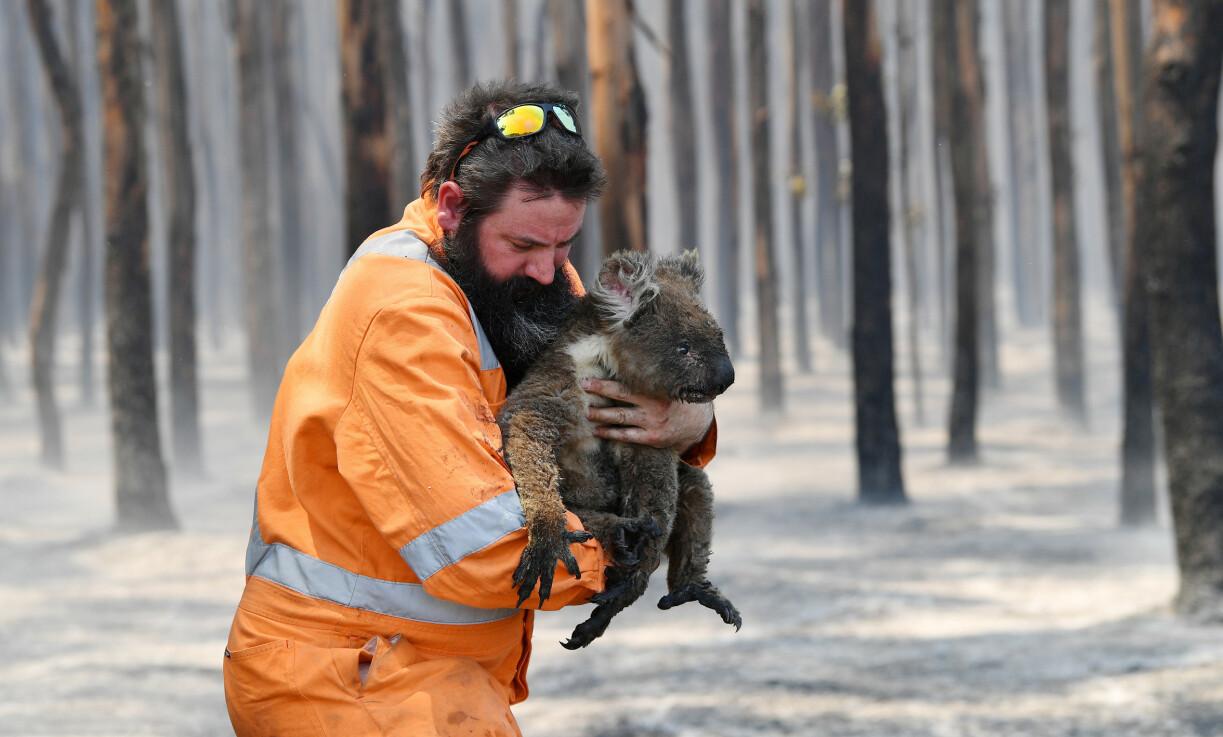 KLIMAKRISE: Klimakrisen kommer raskere enn det vi hadde trodd. Tusenvis av menneske- og dyreliv gikk tapt i branner og flommer som kom ut av kontroll ifjor, skriver innsenderen. Her blir en liten koala reddet ut av den brennende skogen nær Cape Borda på Kangaroo-øya, Australia, i januar i år. Foto: AAP Image/David Mariuz/REUTERS/NTB Scanpix