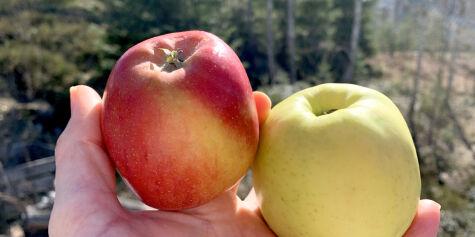 image: Matvarene som kan skape trøbbel for pollenallergikere