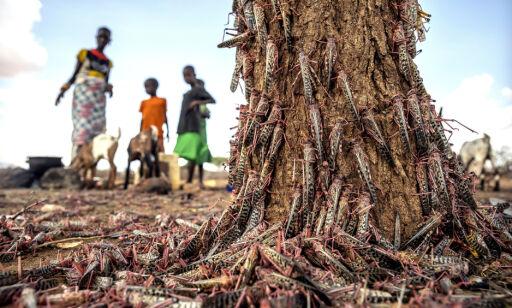 image: FN advarer mot sult av «bibelske proporsjoner»