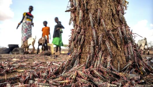 FN advarer mot sult av «bibelske proporsjoner»