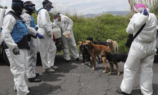 image: Hunder trenes i håp om at de kan lukte coronasykdom