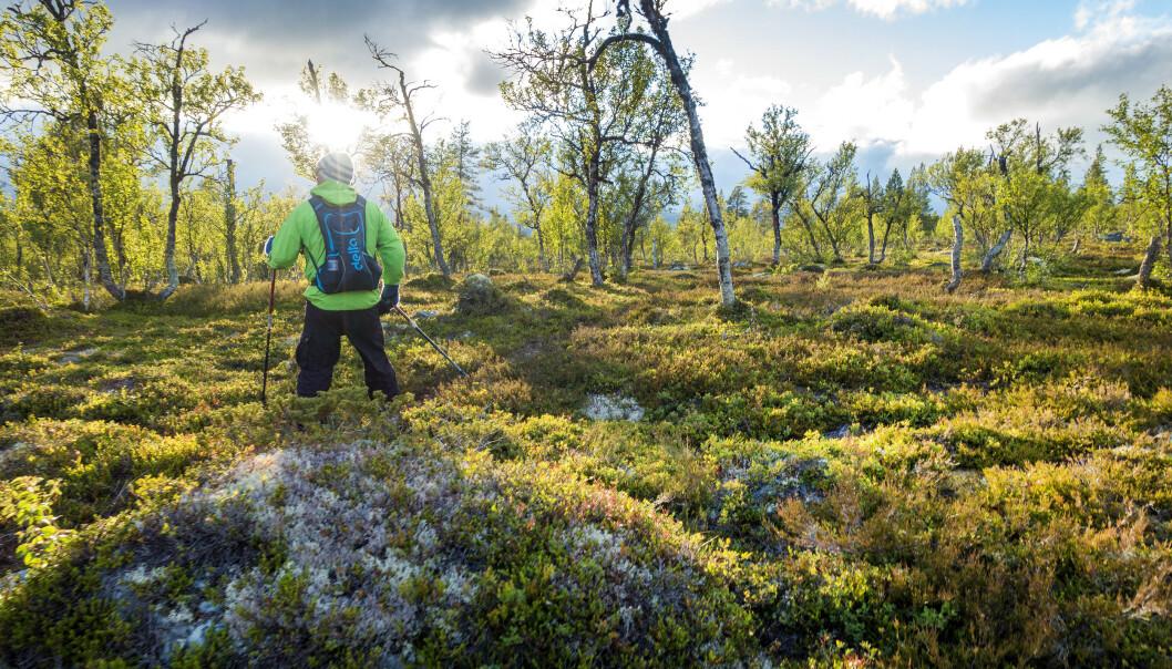 <strong>TIL FJELLS:</strong> Femundsmarka er ett av mange mulige reisemål i sommer, om du vil litt utenom de mest populære, norske reisemålene. Foto: NTB Scanpix