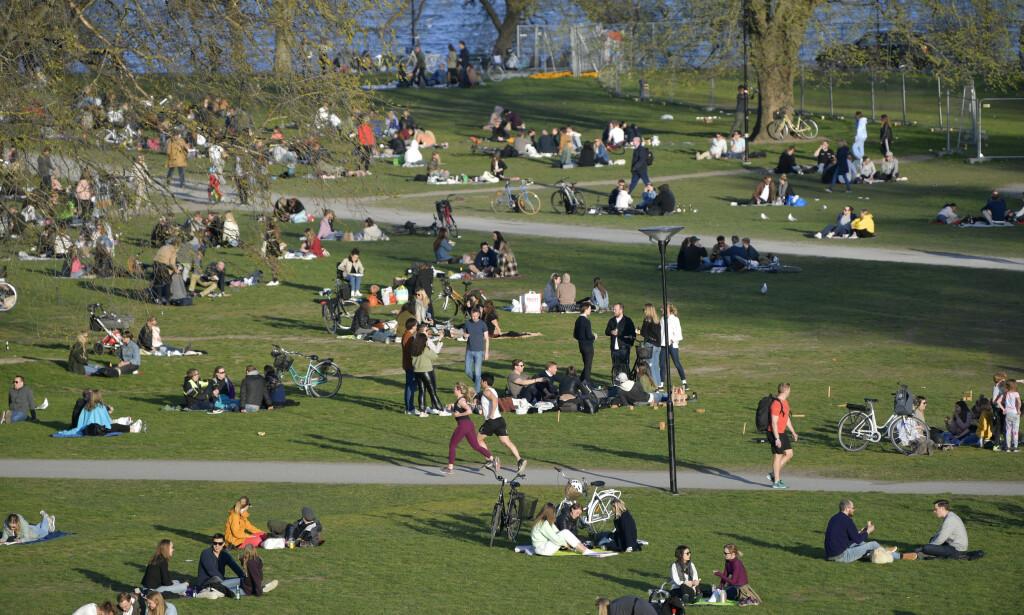 Folksomt i parkene i Stockholm, tross koronapandemien. To forskere har regnet seg fram til at det kan dø opptil 20.000 svensker som følge av viruset. Foto: Anders Wiklund / TT via AP / NTB scanpix