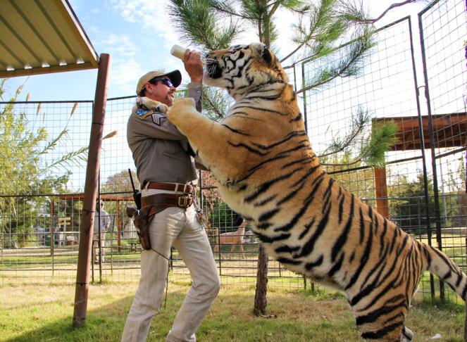 FIENDER: Tiger King alias Joe Exotix forer en av tigrene han flasket opp fra de var små. I dag sitter Exotic fengslet, dømt til 22 år blant annet for å ved to anledninger ha planlagt leiemord på Carole Baskin. FOTO: Netflix