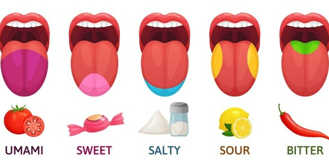 SMAK: Her ser du hvor på tunga vi kjenner de forskjellige smakene. FOTO: NTB Scanpix