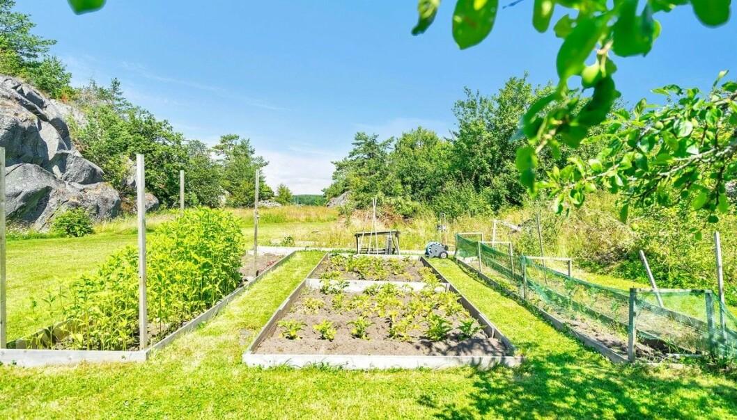 <strong>- SELVFORSYNT:</strong> Ifølge megler er eiendommen betydelig oppgradert - blant annet med egen grønnsakshage. Foto: Stein Olsen