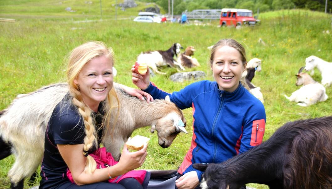 LUNSJDATE: I Kårdal holder geitene oss med selskap ved det hyggelige stølsysteriet Rallarrosa. FOTO: Mari Beraksten