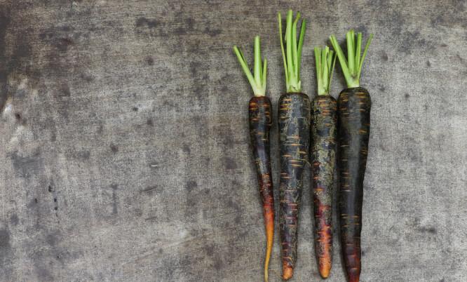 BLACK CARROT: Det mørke fargestoffet black carrot motvirker at betakarotenet forvandler deg til en oransje gulrot, en risiko som er til stede ved andre betakaroten-produkter.