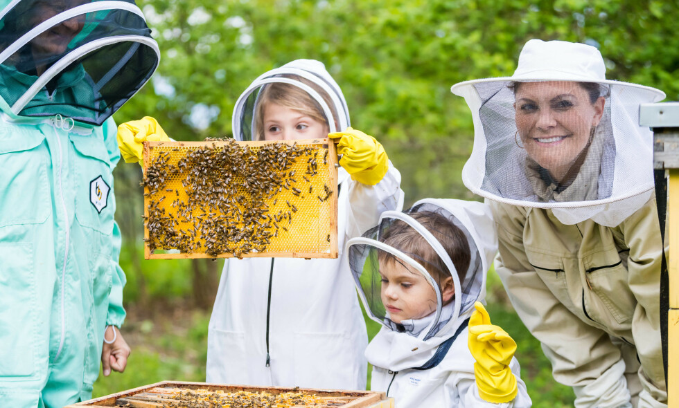 I FARTA: Kronprinsesse Victoria utforsket biene i hagen på Haga slott sammen med barna Oscar og Estelle mandag denne uken. I dag er det verdensdagen for bier. Foto: NTB Scanpix