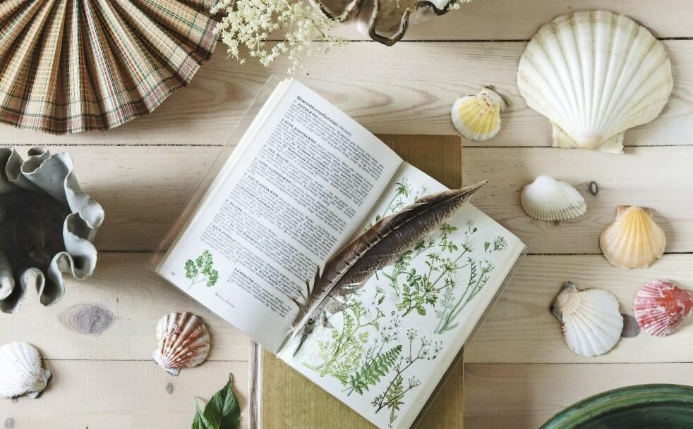<strong>INTERIØR:</strong> Innred med botaniske motiver, skjell og fine loppefunn hvis du vil skape samme stemning som i Ann-Lies sommerhus. FOTO: Christina Kayser O.