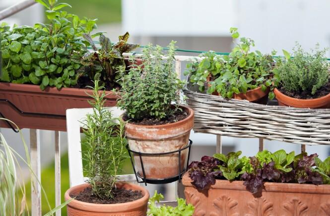 <strong>KJØKKENHAGE PÅ BALKONGEN:</strong> Du behøver ikke stor plass for å skape en kjøkkenhage, men ifølge gartner Kenneth Ingebretsen bør grønnsakene få så mye sol som mulig. FOTO: NTB Scanpix