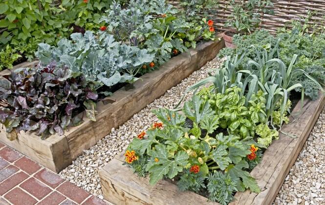 <strong>BLOMSTER BLANT GRØNNSAKENE:</strong> I Frankrike planter man blomster, gjerne spiselige, sammen med grønnsakene og urtene. Slike kjøkkenhager kalles «potager» og er ofte den vakreste delen av hagen. FOTO: NTB Scanpix