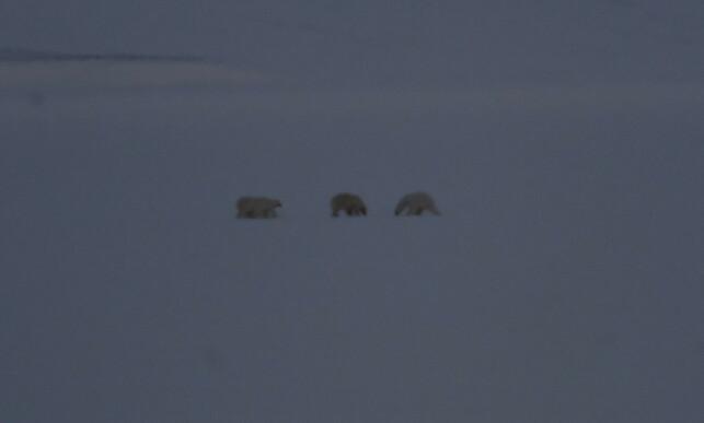 FARE: Under oppholdet har de blant annet få se isbjørner. Foto: Privat/Hearts in the ice