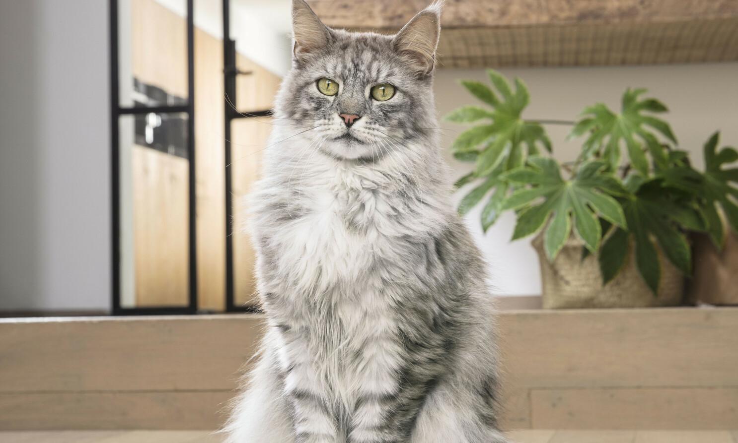 LYKKELIG KATT: En katts velvære og helse er helt avhengig av riktig ernæring.