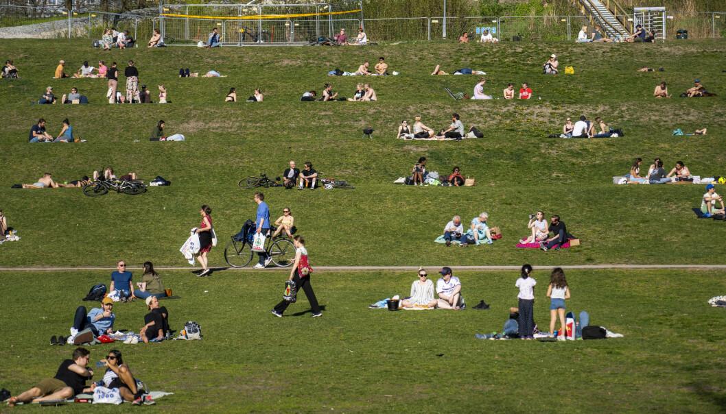 Folk hygger seg i Tøyenparken i Oslo. FHI anslår at 0,7 prosent av befolkningen har vært smittet av covid-19. Foto: Håkon Mosvold Larsen / NTB scanpix