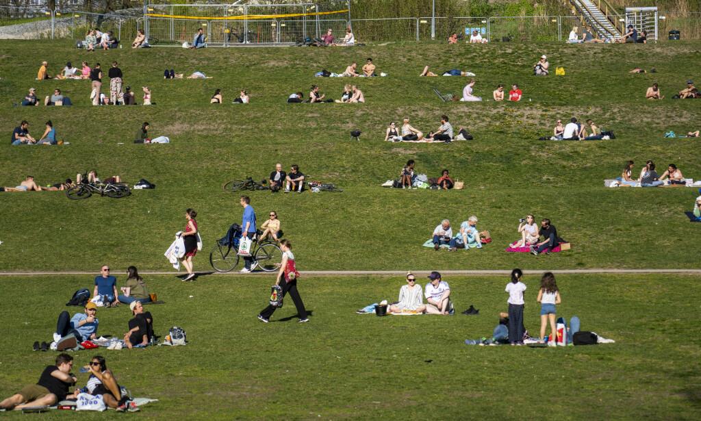 TITUSENER SMITTET: Folk hygger seg i Tøyenparken i finværet onsdag kveld. Nye beregninger fra FHI anslår at mellom 30 000 og 40 000 nordmenn har blitt smittet av covid-19. Foto: Håkon Mosvold Larsen / NTB scanpix