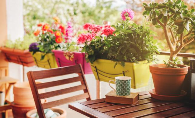 KOSELIG MED BLOMSTER: Unn deg noen fargerike blomster fra Floriss på verandaen. Foto: Shutterstock