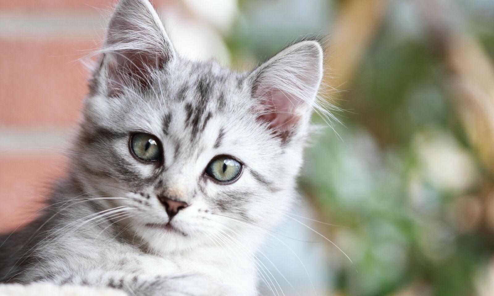 image: Slik holder du katten din frisk