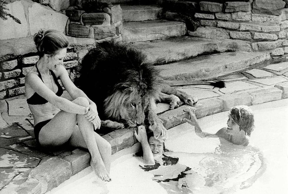 LØVENES DRONNING: Melanie Griffith som tenåring, sammen med løven Neil. Mamma Tippi Hedren smiler oppmuntrende. Nå forteller Melanies datter Dakota Johnson om hvordan hun husker livet med rovdyrene. FOTO: NTBScanpix