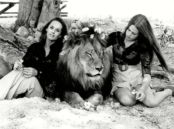 NÅ BLE DU FIN: Tenåringen Melanie pynter løven, til ære for fotografen, FOTO: NTBScanpix