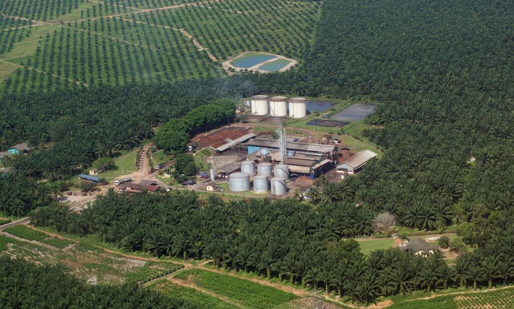 ØKTE UTSLIPP: På det norske CO2-regnskapet gir palmeolje 0 - null - i utslipp. Men globalt gir palmeolje høyere CO2-utslipp enn fossil diesel. I tillegg til miljøødeleggelsene. Foto: David Loh / Reuters / NTB Scanpix