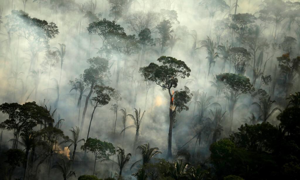 BRANNSESONG: Snart kan regnskogen i Amazonas se slik ut igjen. Bildet er fra i fjor, da enorme deler av skogen brant. Foto: Reuters