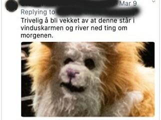 image: Tanja (25) skal leve som katt
