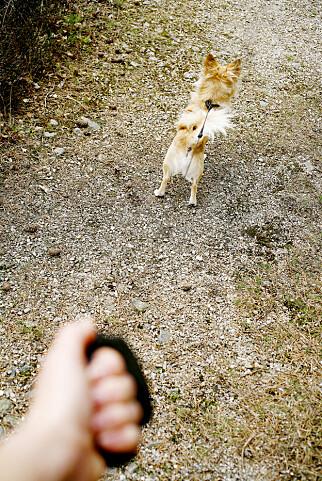 SÅNN JA: Båndtvang for alle hunder fra 1. april til 20. august. Illustrasjonsfoto: Sara Johannessen Meek, NTB Scanpix.