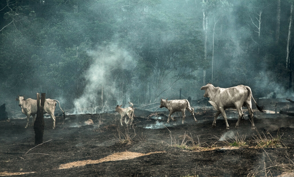 NEDBRENT: Flere store områder av regnskogen brant i fjor. Foto: Araquém Alcântara / Regnskogfondet